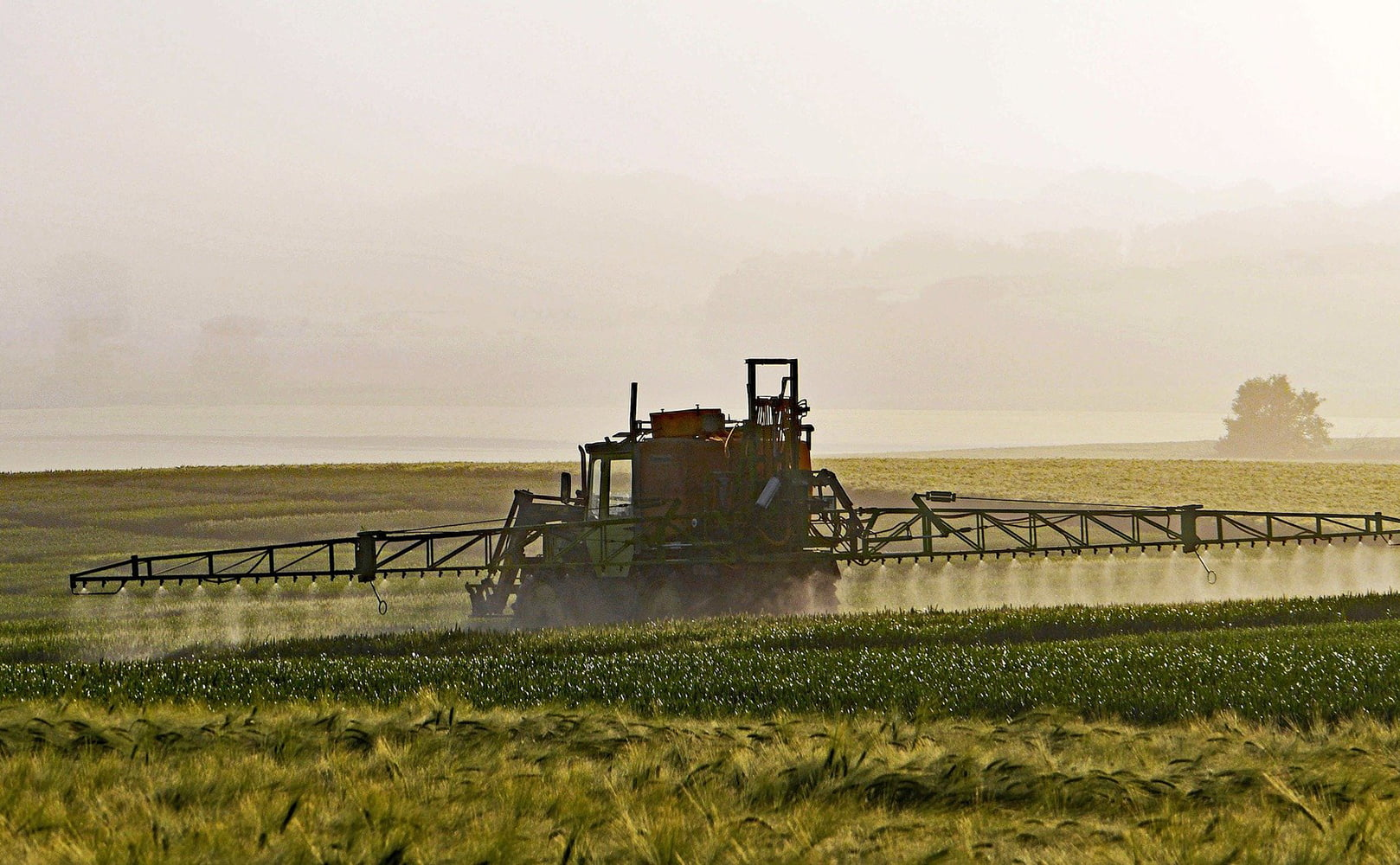 Farmer Spraying Pesticides on Wheat Field